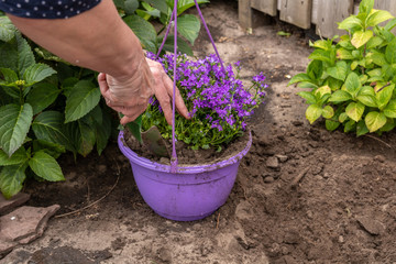 senior woman gardening and filling pots with flowers.