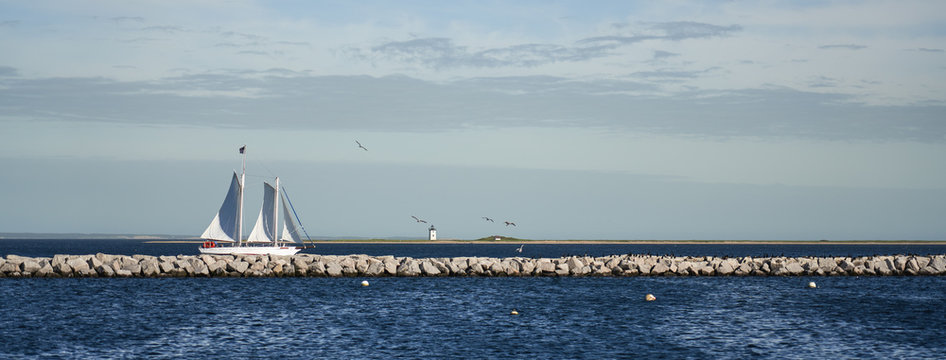 Sailboat and the Long Point Light Station in the distance panoramic view with many birds on the breakwater between
