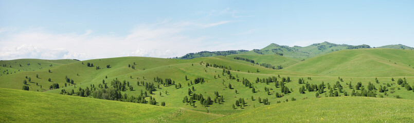 Beautiful hilly panoramic summer landscape with green grassy hills in a sunny day