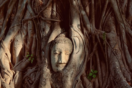 ayutthaya, thailand,mahathat temple