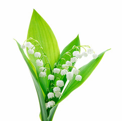 Poster de jardin Muguet de mai Lily of the valley isolated on white background
