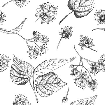 Linden blossom hand drawn seamless pattern with flower, lives and branch in black color on white background. Retro vintage graphic design Botanical sketch drawing