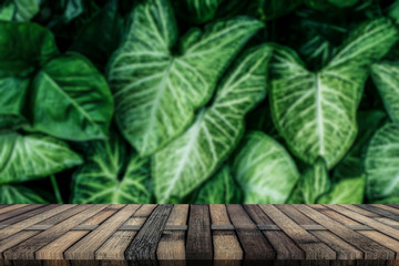 Green leaf isolated background.Wooden board empty table in front of blurred background.