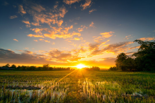 Natural scenic Beautiful rice field and sunset at Thailand.