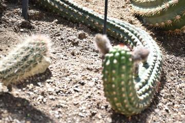 Cactus, snake