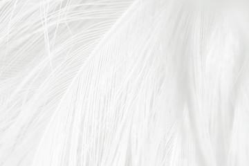 Beautiful white feather pattern texture background Fototapete