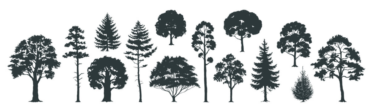 Trees silhouettes. Forest and park pines firs and spruces, coniferous and deciduous trees. Vector isolated retro images nature set