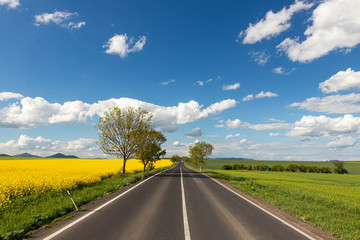 A road leading to horizon between two fields. One, yellow, with rapeseed, the other one, green, with crop. Lovely contract with blue skies and few white clouds. Fresh spring atmosphere. Wall mural