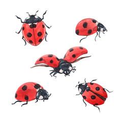 Fototapeta Watercolor ladybug illustration set obraz