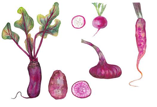 Similar of purple vegetables.