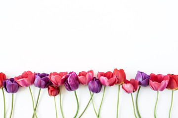 Floral composition with colorful tulip flowers on white background. Flat lay, top view florist blog hero header, summer blossom pattern.