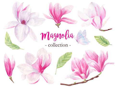 Wild magnolia hand drawn watercolor raster illustrations set