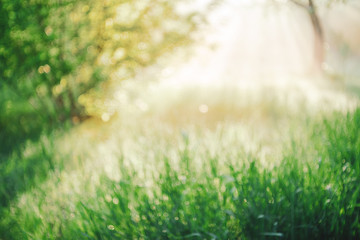 Blurry abstract scenic natural green background. Blurred green grass in sunny day with copy space. Sunshine on beautiful grass in blur. Morning nature in sunlight. Defocused backdrop with sunbeams. Wall mural