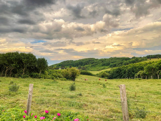 French countryside sunset landscape, feels with cattle,trees and wild flowers with sun setting.