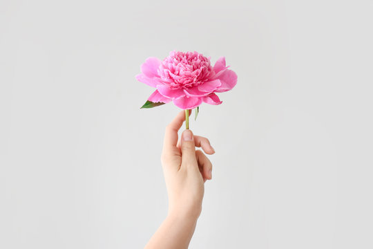 Female hand with beautiful peony on light background