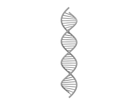3d rendering of DNA string isolated in white background
