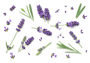 Papiers peints Lavande Lavender Flowers Isolated On White Background