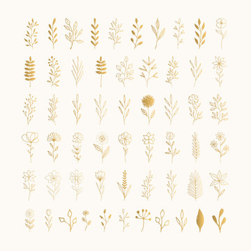 Set of golden flowers and herbs. Ink drawn vector illustration. Vector isolated.