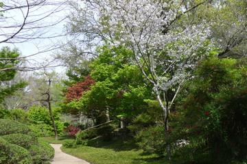 Promenade on the Fort Worth Japanese Garden