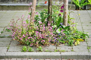 Various flowers in purple, blue and other colors in a small spontaneous little garden around a young tree on an urban sidewalk