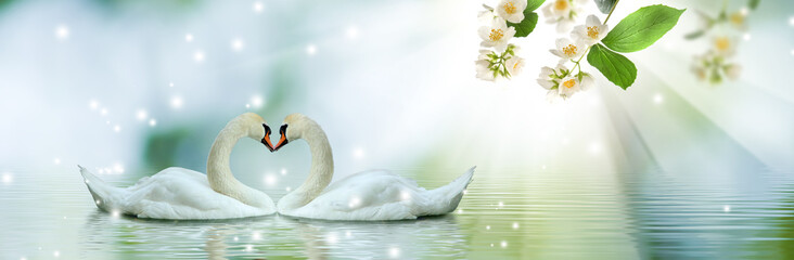 Papiers peints Cygne image of beautiful swans and flowering branches above the water