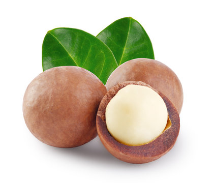 Whole and open australian macadamia nut with the two green leaf