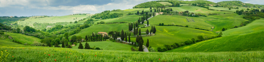 Cypress road near small village of Monticchiello, Tuscany, Italy Wall mural
