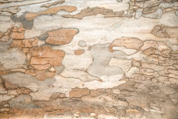 Fotobehang Oude vuile getextureerde muur Bark Tree Texture