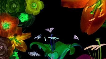 Magic luminous flowers. Beautiful flowers abstract background. Inspiration fantasy image on a black background