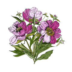 Bouquet of peony flowers. Hand drawn ink sketch of  peony. Colored elements isolated on white background for banner, invitation or greeting card.