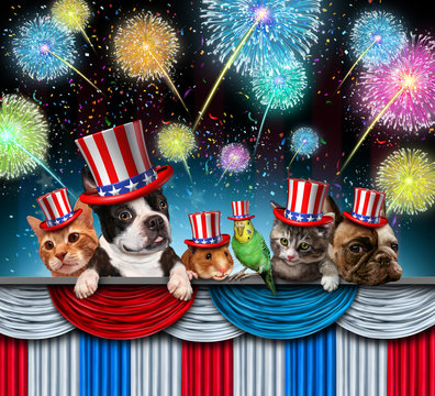 Fourth Of July Pet Celebration