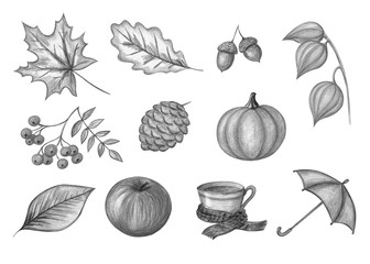 Autumn monochrome set on a white background. Illustration of hand drawing.
