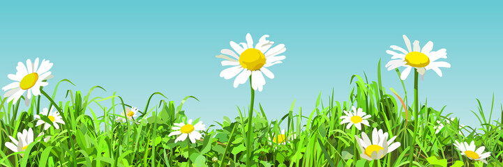 panoramic background of cartoon green glade with daisy flowers
