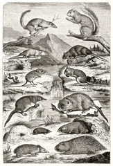 Old illustration depicting a set of Rodents in parallel classification according to E.G. Saint-Hilaire. All the animals arranges in a natural context. By Werner publ. on Magasin Pittoresque Paris-1848