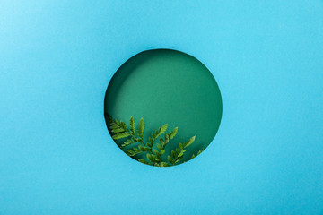 geometric background with green fern leaf in round hole on blue paper