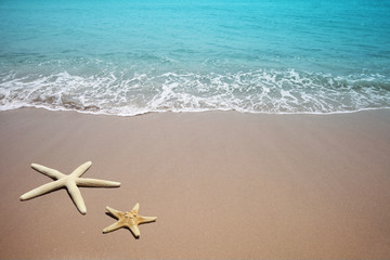 Two starfish on a beach. Sand and sea wave.