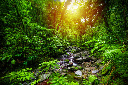 Small stream in Guadeloupe jungle at sunset