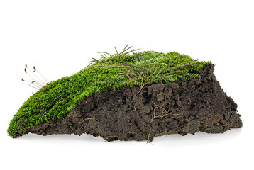 Green moss and pile dirt isolated on a white background