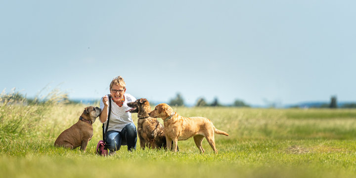 Dog sitter is walking  with many dogs on a leash. Dog walker with different dog breeds in the beautiful nature