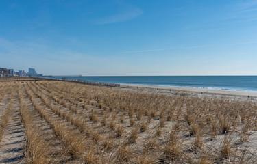Rows of Sea Grass along Shoreline with Calm Ocean