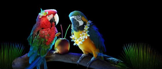 Papageien im Urlaub am Strand in den Flitterwochen