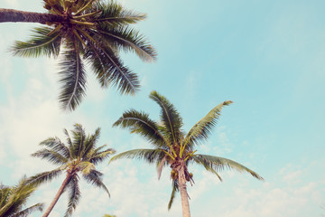 Wall Mural - Palm tree on tropical beach with blue sky and sunlight in summer, uprisen angle. vintage instagram filter effect
