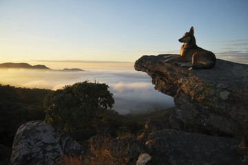 Dog sitting on stones looking at the fog in the mountains in Brazil