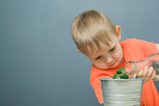 european blond boy child watering young money tree plant or crassula ovata in metal flower pot, home  indoor gardening, close-up horizontal stock photo image with copy space for text