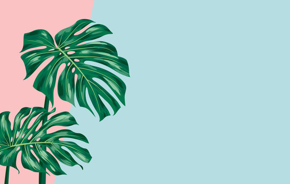 Monstera deliciosa on color paper background with copy space vector illustration