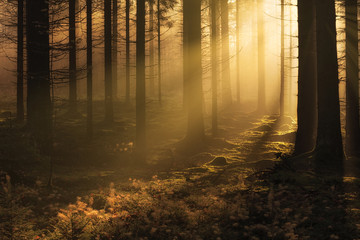 Dark mystical autumn forest with fog and warm sunlight