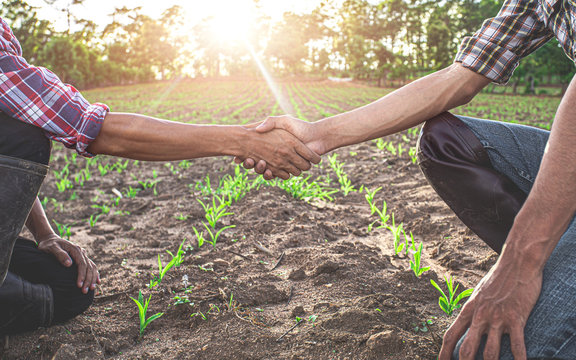 Two farmer sitting and shaking hands in young corn field. agricultural business concept.
