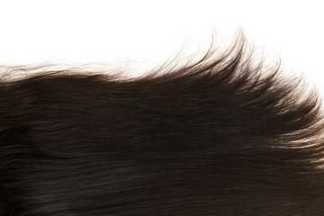 Dark natural hair on a white background