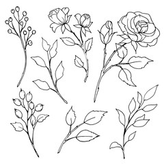 Black lines flower set, roses sketch. Hand drawing floral illustration. Perfectly for greeting card, tattoo,  poster, banner. Isolated on white background.