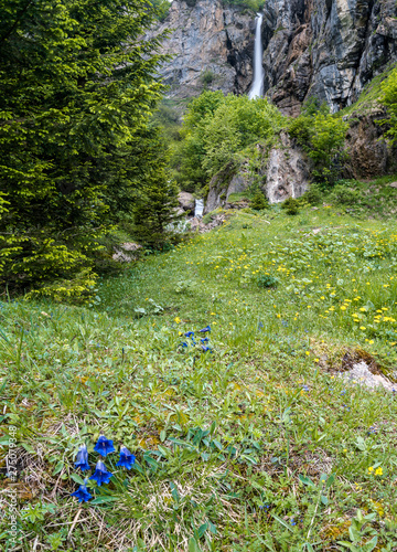Wall mural landscape view of a high picturesque waterfall in lush green forest and mountain landscape with Enzian flowers